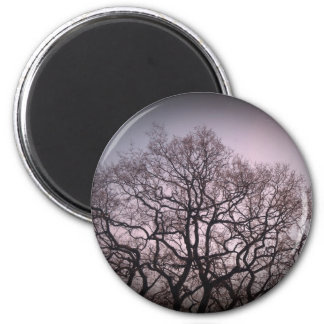 Spindly trees magnet