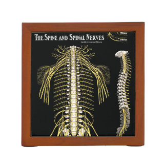 Spine and Spinal Nerves Chiropractic Pencil/Pen Holder