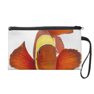 Spine-cheek anemonefish (Premnas biaculeatus) Wristlet Purse