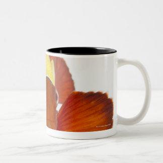 Spine-cheek anemonefish (Premnas biaculeatus) Mugs