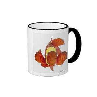 Spine-cheek anemonefish (Premnas biaculeatus) Mug