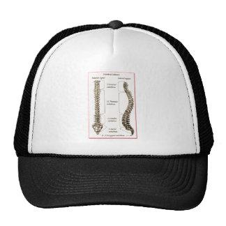 Spine Details Sepia2 Hats