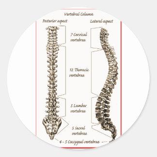 Spine Details Sepia2 Round Stickers