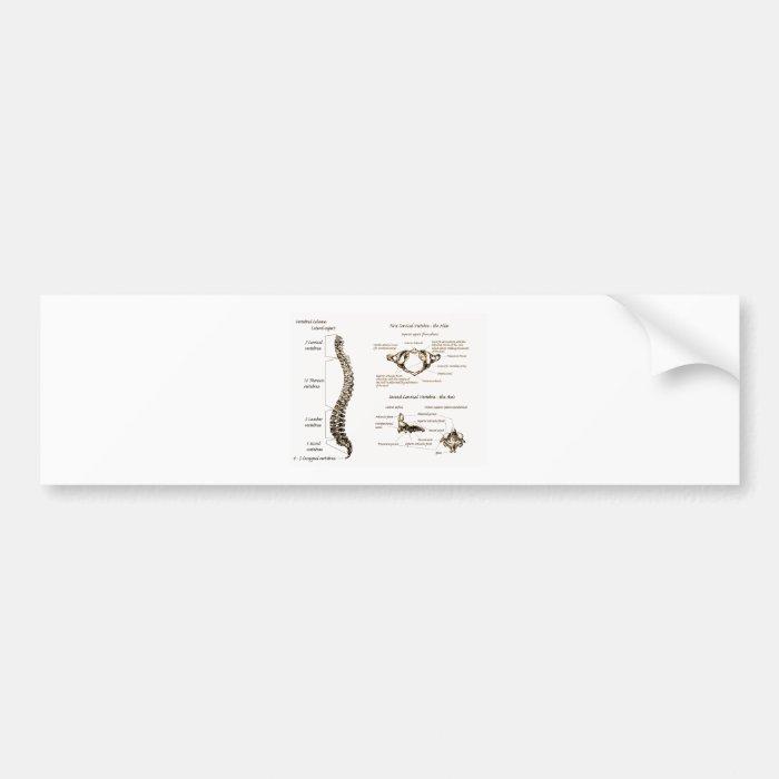 Spine Details Sepia Bumper Sticker