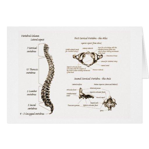 Spine Details Sepia Card