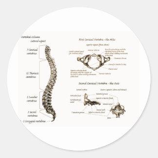 Spine Details Sepia Round Stickers