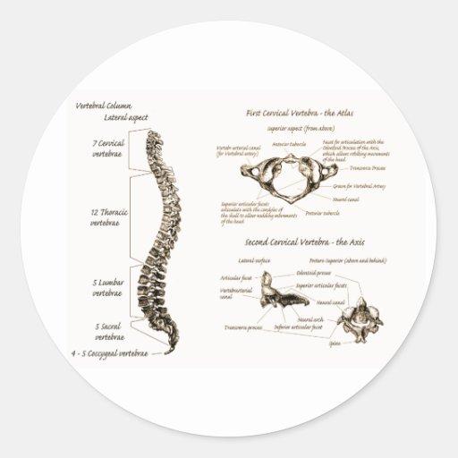 Spine Round Stickers