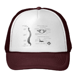 Spine Trucker Hat