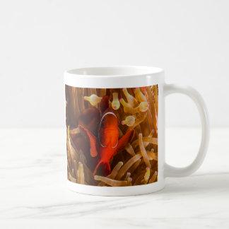 Spinecheek Anemonefish of the Coral Sea Coffee Mug