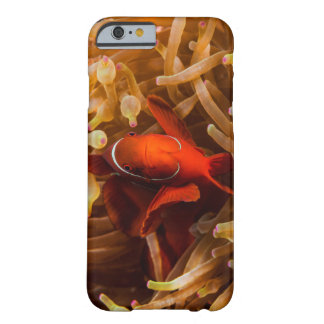 Spinecheek Anemonefish on the Great Barrier Reef Barely There iPhone 6 Case