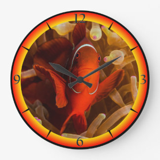 Spinecheek Anemonefish on the Great Barrier Reef Large Clock