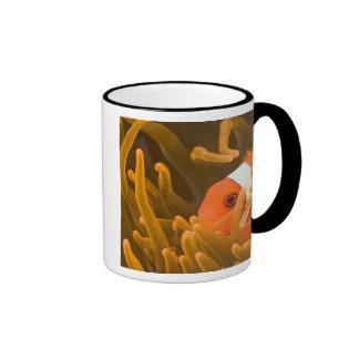 Spinecheek anemonfish, Tulamben, North Bali, Ringer Mug
