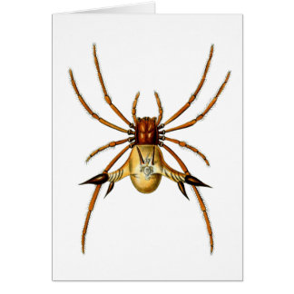 Spined Spider Card