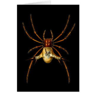 Spined Spider Greeting Card