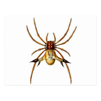 Spined Spider Postcard