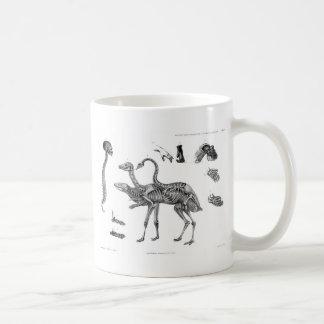 Spines & Girdles: Avian Reptile Human Skeletons Classic White Coffee Mug