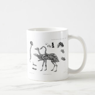 Spines & Girdles: Avian Reptile Human Skeletons Classic White Coffee Mug