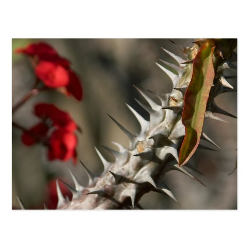 Spines On A Cactus Postcard