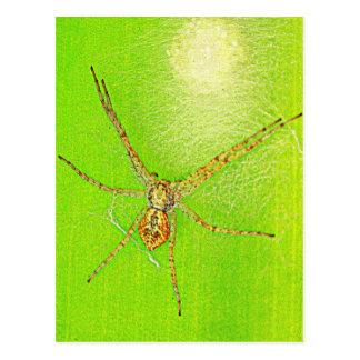 Spinne auf Blatt Post Cards