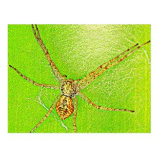 Spinne auf Blatt Postcards