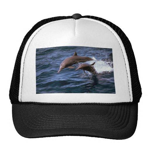 Spinner dolphin trucker hat