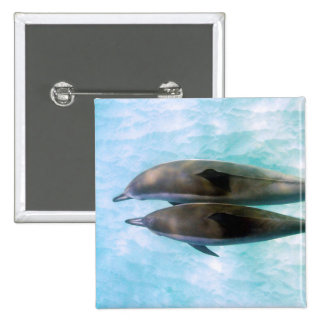Spinner Dolphins | Oahu Hawaii Button