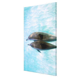 Spinner Dolphins | Oahu Hawaii Canvas Print
