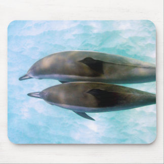 Spinner Dolphins | Oahu Hawaii Mouse Pad