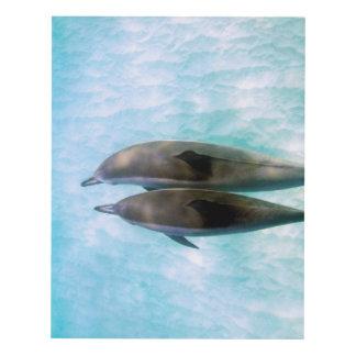 Spinner Dolphins | Oahu Hawaii Panel Wall Art