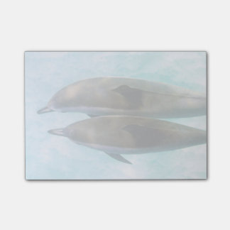 Spinner Dolphins | Oahu Hawaii Post-it Notes