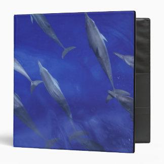 Spinner dolpins Stenella longirostris) Binder