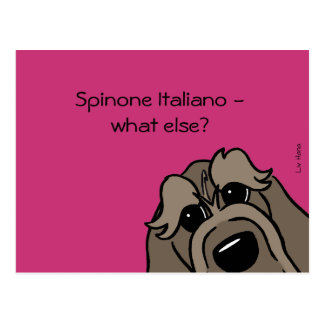 Spinone Italiano - does else what? Postcard