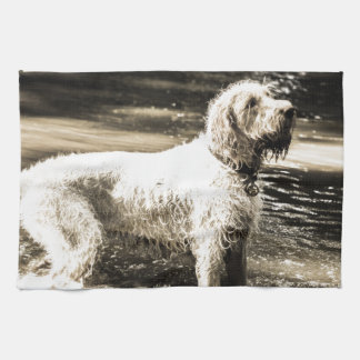 Spinone Kitchen Towels