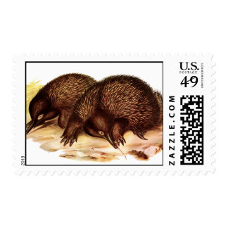 spiny anteater postage