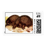 spiny anteater stamp
