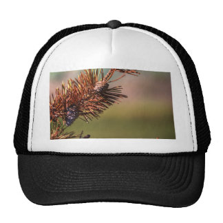 Spiny Cones Trucker Hat