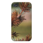 Spiny Cones iPhone 4 Cover