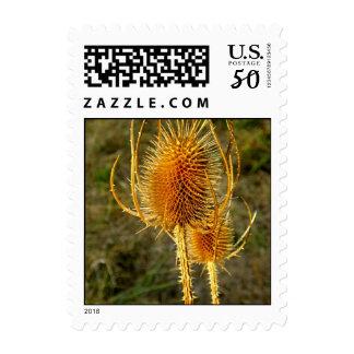 Spiny Dancer Golden Cattail Postage Stamp