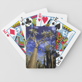 Spiny Forest Formed Of Pachypodium Trees Bicycle Playing Cards