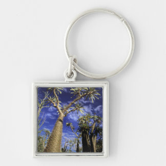 Spiny Forest Formed Of Pachypodium Trees Key Chain