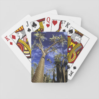 Spiny Forest Formed Of Pachypodium Trees Playing Cards