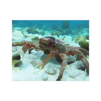 Spiny Lobster Canvas Print