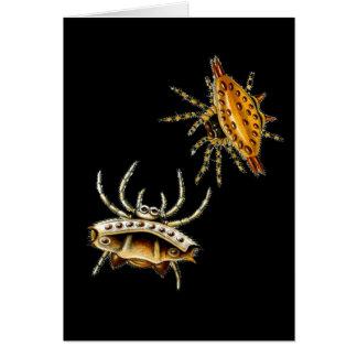 Spiny Orb-Weaver Card