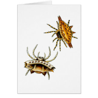 Spiny Orb-Weaver Greeting Card