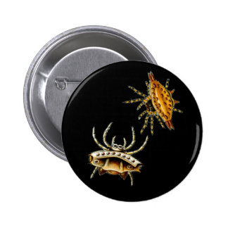 Spiny Orb-Weaver Pin