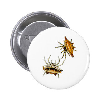 Spiny Orb-Weaver Pinback Button