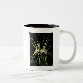 spiny orchid Two-Tone coffee mug