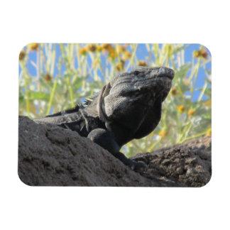 Spiny-tailed Iguana Magnet