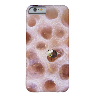 Spinyhead Blenny (acanthemblemaria spinosa) in Barely There iPhone 6 Case
