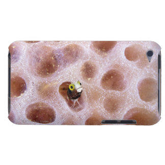 Spinyhead Blenny (acanthemblemaria spinosa) in Case-Mate iPod Touch Case